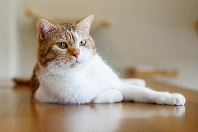 Der Katzentempel in Muenchen