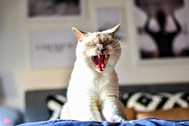 Das Verdauungssystem der Katze