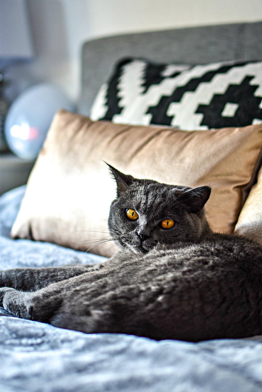 Das Katzen Verdauungssystem