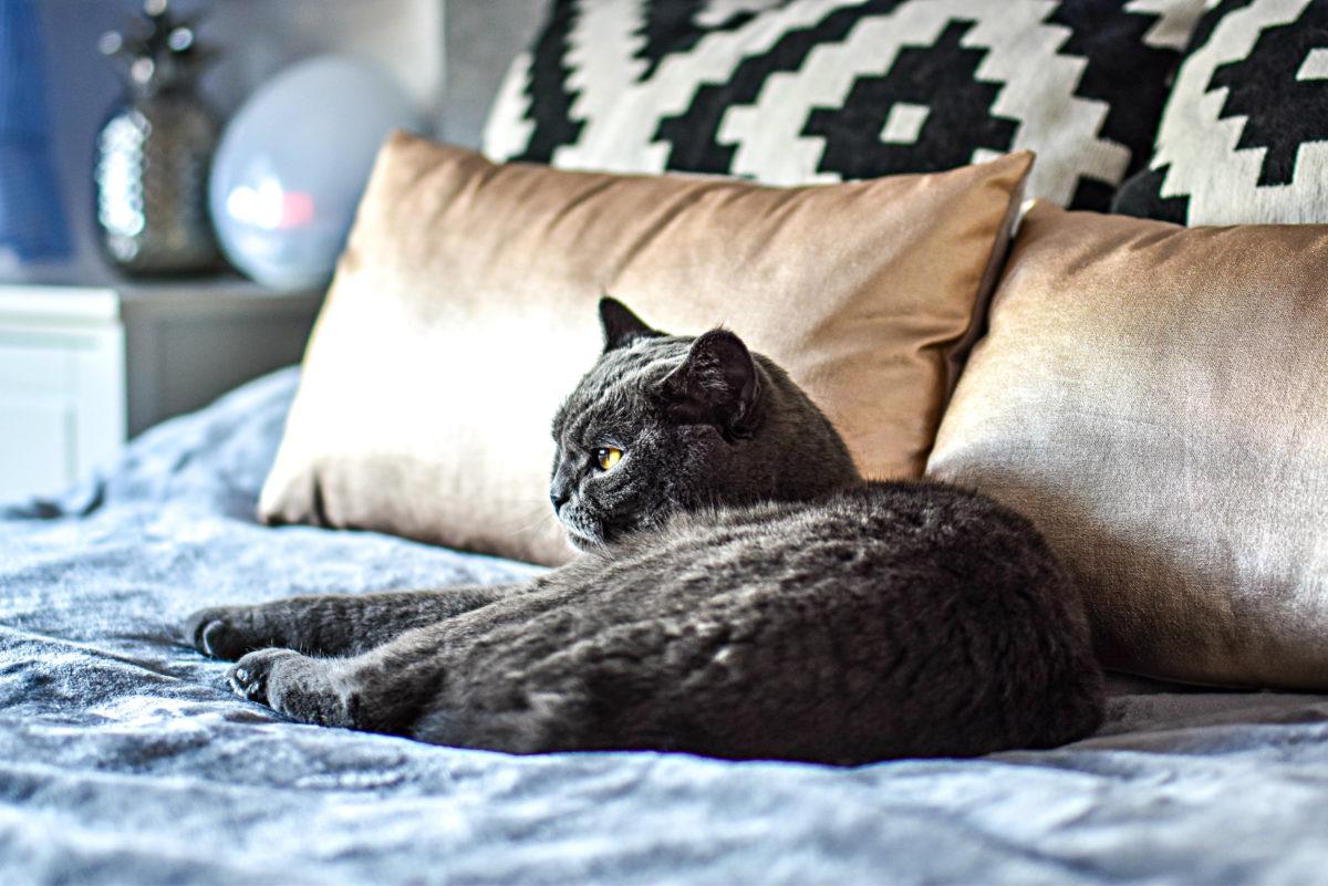 Der Bauch und die Verdauung der Katze