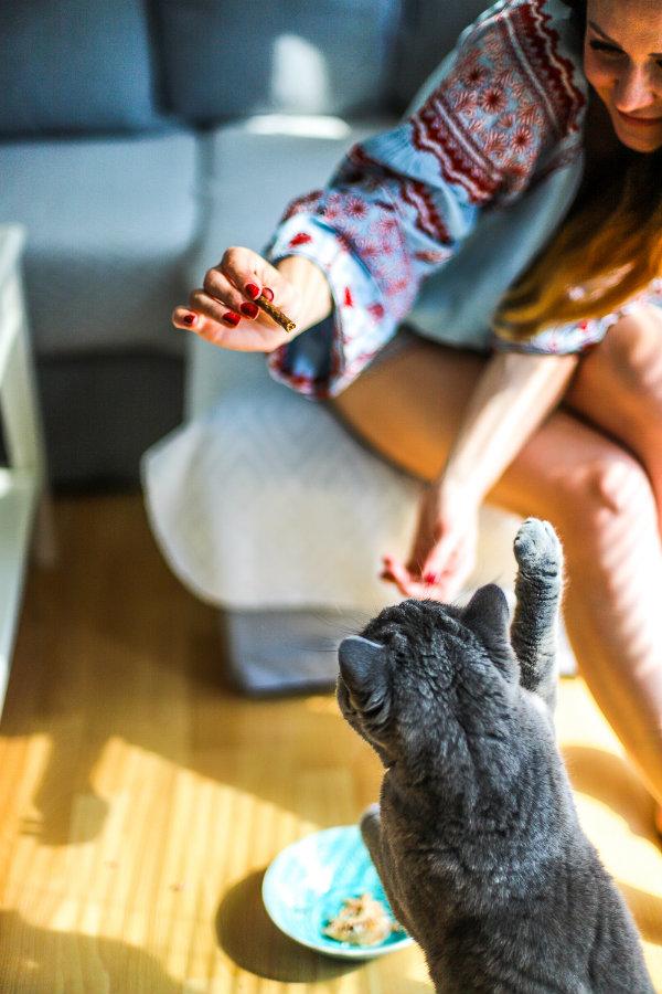Schesir steht für tierversuchsfreie Tiernahrung