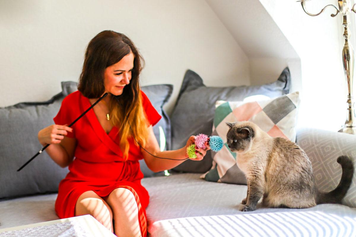 Katzenliebe und Zuneigung zeigen