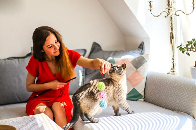 Wie Katzen ihre Zuneigung zeigen