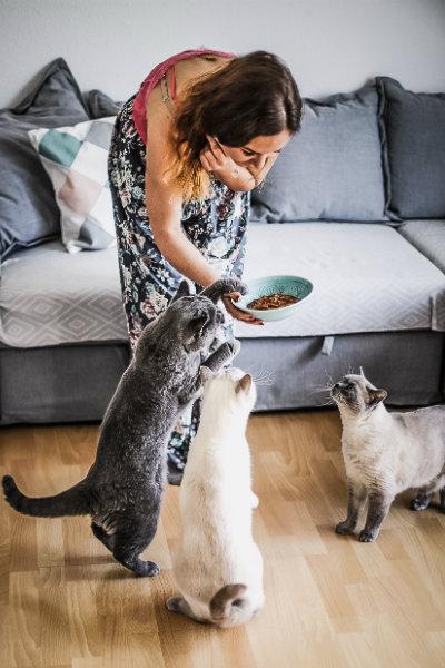 PurinaONE Katzen Futter