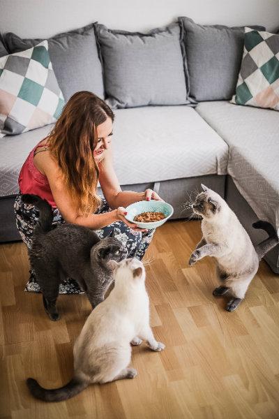 PurinaONE Mischfuetterung fuer Katzen