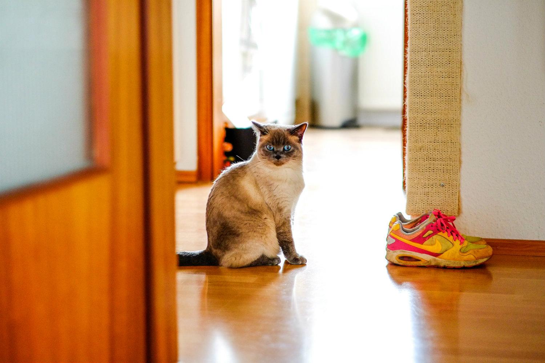 Die Futterumstellung bei Katzen