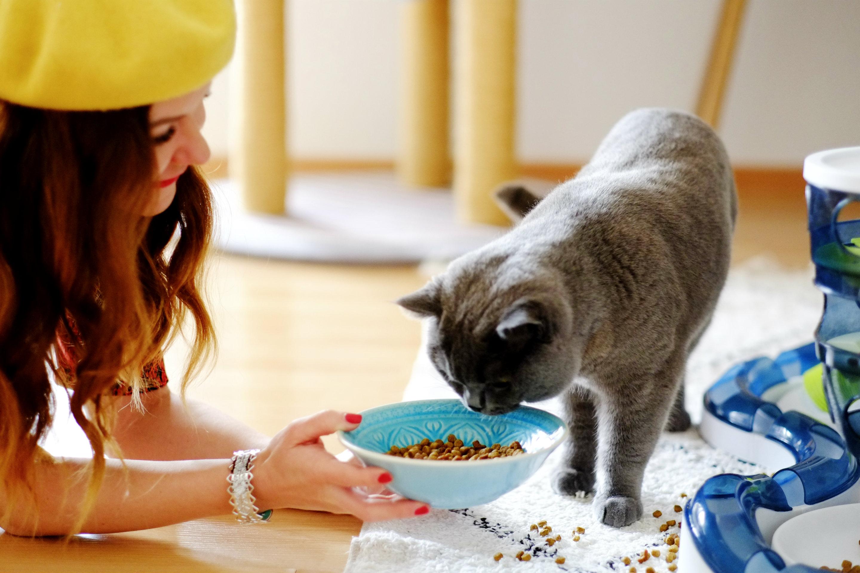 Spirulina stärkt das Immunsystem auch von Katzen.